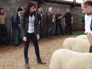 Roscommon 2016 - Judge Laura Shelvin inspects the rams.JPG