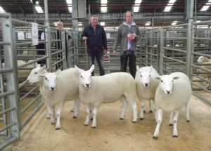 Stirling 2015 - Champion Shearling Ewes from Hamish Goldie - £380.jpg