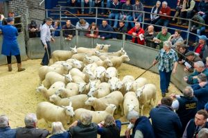 Carlisle 2018 - Ring fulls of sheep were offered.jpg