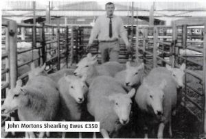 2004 - John Morton sells shearling ewes in Carlisle £350.JPG