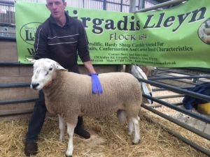 Ballymena 2014 - Top priced ram from Barry Latimer 880gns.jpg