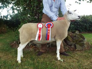 Antrim 2014 - Overall Champion C & A Kennedy.JPG