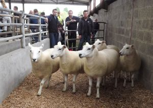 Roscommon 2016 - Champion Shearling Ewes - D Oliver - 300euros.JPG